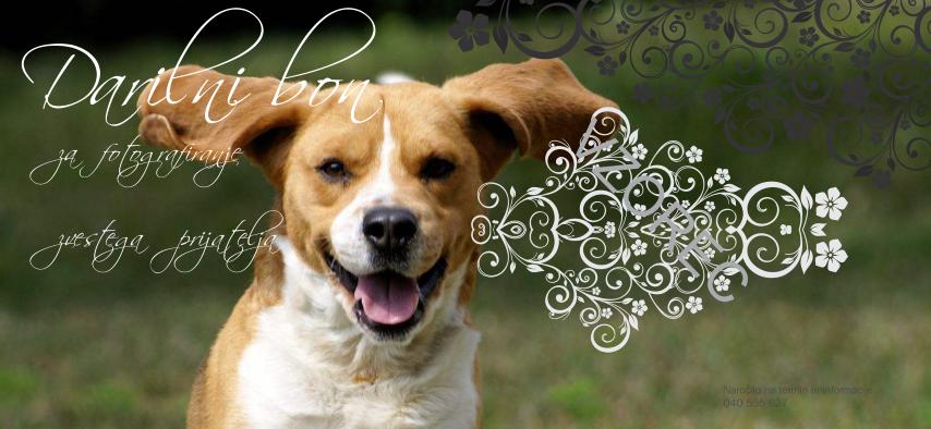 Darilni bon za fotografiranje domače živali psa mačke ...